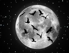 Free Vector Moon Illustration And Birds Royalty Free Stock Photography - 9642357