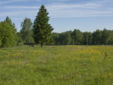 Free Meadow In The Forest Royalty Free Stock Image - 9642716