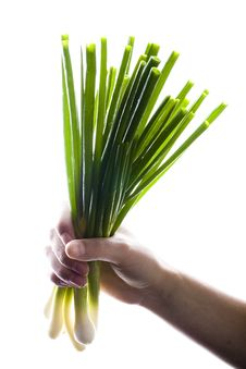 Free Bunch Of Green Onions In Hand Stock Photography - 9643182