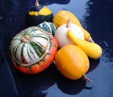 Free Gourds Stock Photos - 9643883
