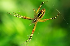 Free Spider Stock Photography - 9646232