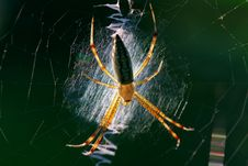Free Spider Stock Photos - 9646243
