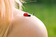 Free Ladybird Royalty Free Stock Photos - 9647468