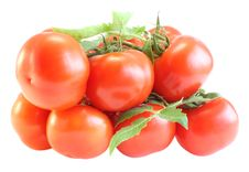 Free Tomatoes With A Branch Royalty Free Stock Photography - 9647897