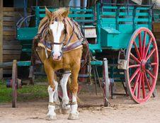 Free Horse Royalty Free Stock Photos - 9647908