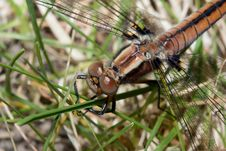 Free Dragonfly In The Grass Royalty Free Stock Images - 9649389