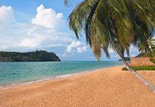 Free Coconut Tree Near The Sea Royalty Free Stock Image - 9649606