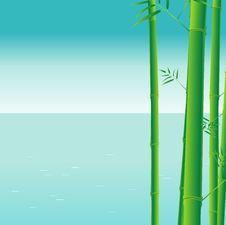 Free Bamboo Royalty Free Stock Photography - 9649937