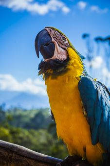 Free Yellow Blue And White Parrot At Daytime Royalty Free Stock Image - 96494836