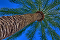 Free Palm Tree HDR Photo Perspective Shot From Below Royalty Free Stock Photo - 9653825