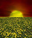 Free Sunrise Of Dandelion Field Royalty Free Stock Images - 9655099