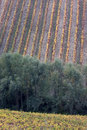 Free Italian Vineyards In Oltrepo Pavese Stock Images - 9656244
