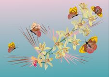 Butterflies And Ochids On Pink And Blue Royalty Free Stock Photo