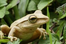Free Small Frog Stock Photography - 9651212