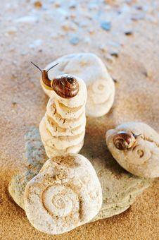 Free Two Snail Royalty Free Stock Photo - 9651415