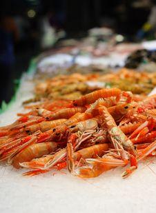Free Shrimps On Ice Stock Image - 9651941