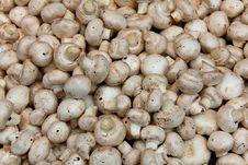 Free Mushrooms Stock Photo - 9652380