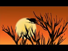 Free The Crow Calls In The Sunset Stock Photo - 9652970