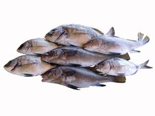 Assorted Fishes Royalty Free Stock Photography
