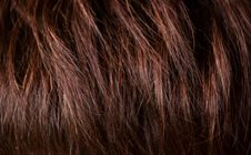 Free Hair Closeup Royalty Free Stock Photos - 9653908