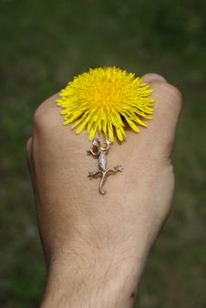 Free Dandelion In Hand Stock Photos - 9654153
