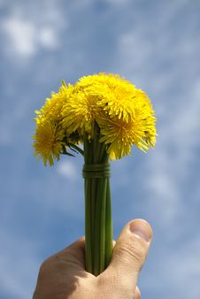 Free A Dandelion Is In A Masculine Hand Royalty Free Stock Image - 9654166