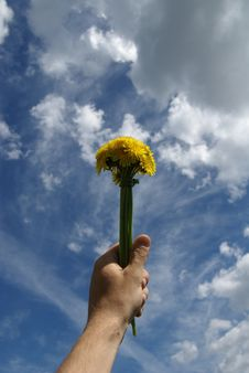 Free A Dandelion Is In A Masculine Hand Royalty Free Stock Photography - 9654177