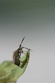 Free Ugly Bug Stock Image - 9654851