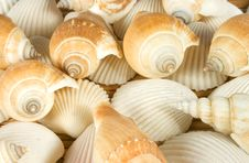 Free Shells Royalty Free Stock Images - 9655479