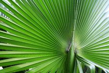 Free The Big Green Palm Leaf Stock Image - 9655921