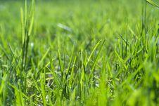 Free Green Grass Stock Photos - 9657173