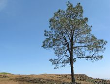Free Summer Solitude Stock Image - 9657481