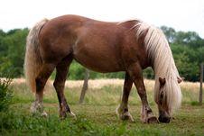 Free Horse In Prairie Royalty Free Stock Photos - 9657668