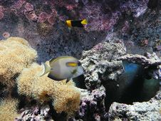 Free Coral Reef Royalty Free Stock Photo - 9657785