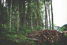 Free Brown Wooden Log Stock Image - 96542421