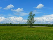 Free Green Field Of Grasses Green Tree In Between Stock Images - 96542454