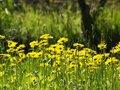 Free Summer Flowers Stock Image - 9663811