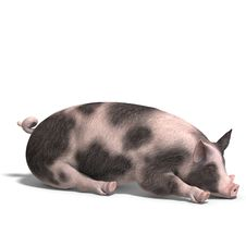 Free Pig Render Royalty Free Stock Photography - 9660037
