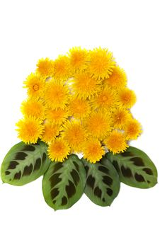 Free Yellow Dandelions With Green Sheet Stock Photo - 9661510
