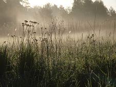 Free Foggy Morning Stock Image - 9663691