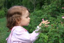 Free Little Girl And Flowers Of Wild Rose. Royalty Free Stock Photography - 9665757