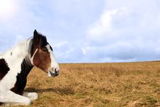 Free Horse Resting Royalty Free Stock Photos - 9667188