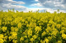 Spring Landscape And The Cloudy Sky. Stock Photo