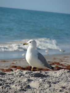 Free Seagull On The Beach Stock Images - 9667914