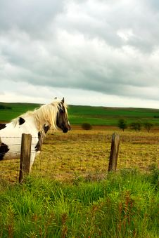 Free Beautiful Horse Watching Royalty Free Stock Images - 9667999