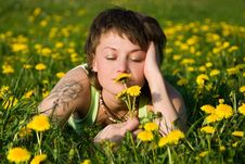Free Dandelions Glade Royalty Free Stock Image - 9669736