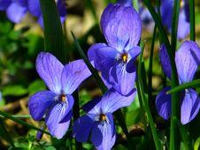 Free Flower, Blue, Flora, Plant Stock Images - 96660844