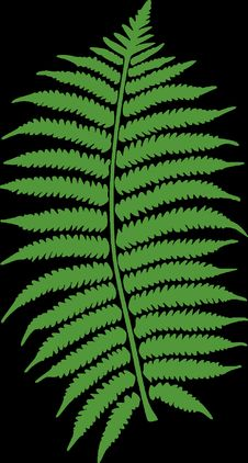 Free Plant, Green, Leaf, Fern Royalty Free Stock Photos - 96662408