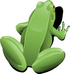 Free Green, Frog, Amphibian, Vertebrate Stock Photos - 96673343