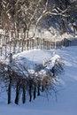 Free Winter Vineyards Stock Image - 9671031